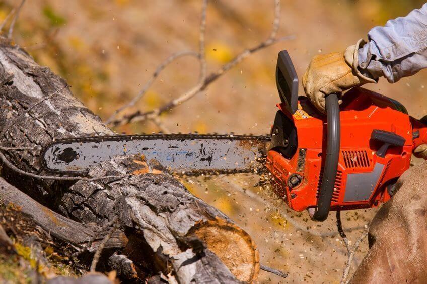チェーンソーで木を伐採